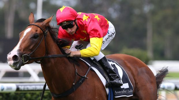 NSW horse of the year ...