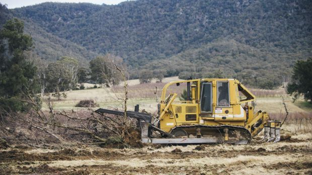 The orchard peach trees are being bulldozed, because the orchards cannot be sold as a going concern.