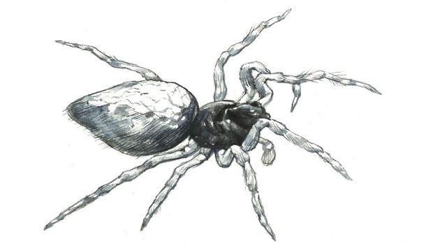 Illustration of the zombie spider