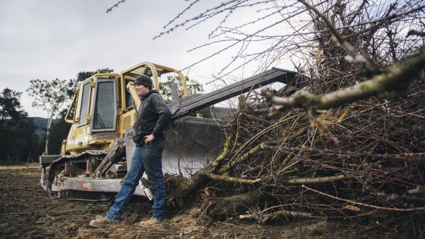 Bulldozer driver Tom O'Brien with some of the Wisbey's orchard peach trees already removed.