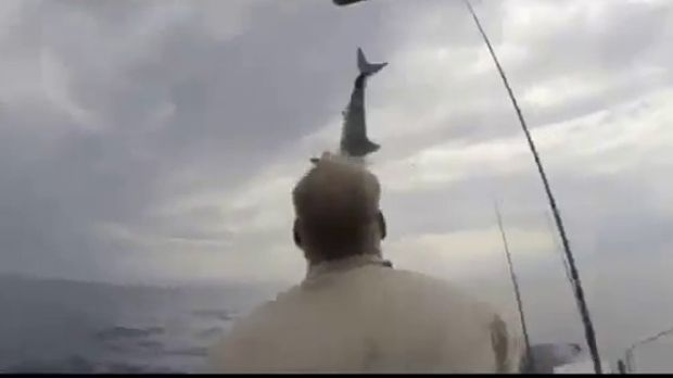 A mako shark leaps out of the water in front of a fisherman in California.
