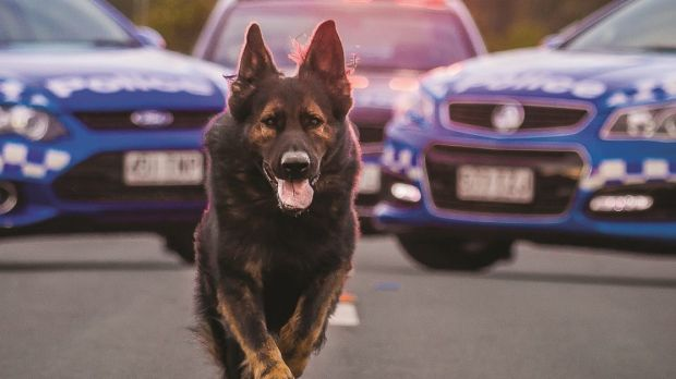 The Dog Squad led police to three people who allegedly assaulted and robbed a taxi driver in Annerley.