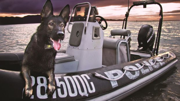 Police dog Mace from Townsville, one of the stars of the 2016 Queensland Police Dog Calendar.