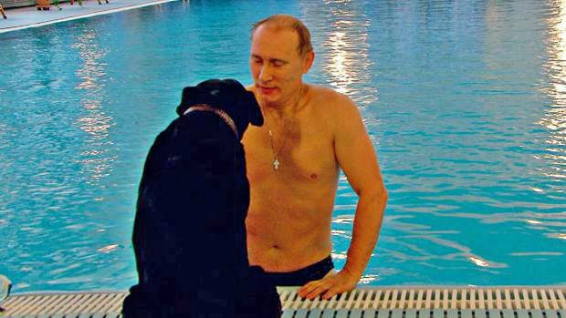 Vladimir Putin swimming in a pool accompanied only by his black labrador Connie.
