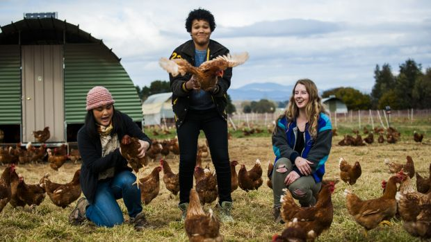 Canberra delegates to the Youth Agricultural Summit, Gabrielle Ho, Victoria Pilbeam and Brittany Dahl, are helping solve ...