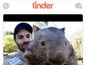 Patrick the wombat is looking for love.