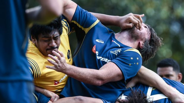 Signalling intentions: Forwards Will Skelton and Kane Douglas in the heat of battle at Wallabies training.