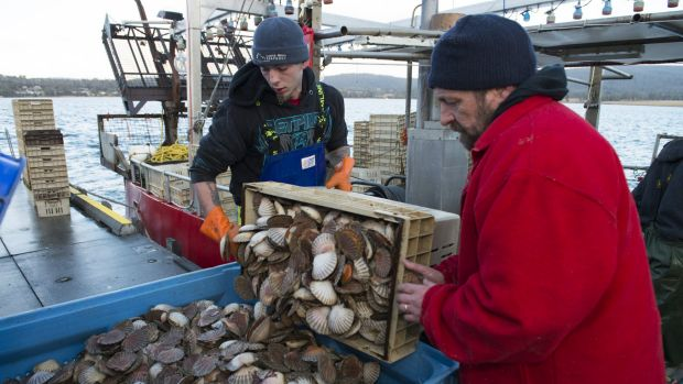 Debbie Wisby's husband Glen Wisby, right, unloading a catch of scallops with his crew at Deepwater Jetty.