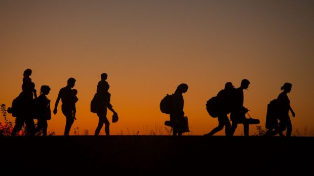 Migrants crossing the border from Serbia into Hungary: This year the world has seen the largest movement of refugees ...