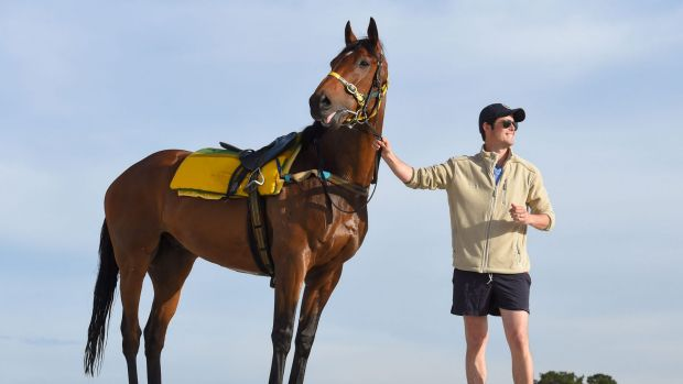 Bart connection: Precedence, pictured with James Cummings, may make the field for a fifth time.