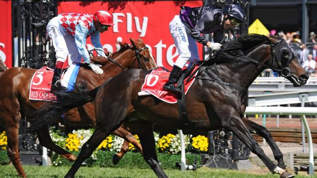 Red Cadeaux and Fiorente