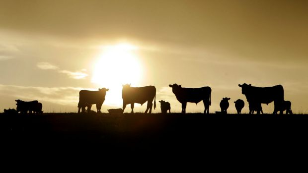 Agricultural Department insiders have slammed a proposal to reduce  the annual wage of an entry-level vet in the ...