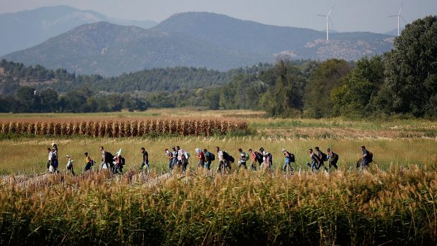 Syrian migrants cross though a cornfield as they walk to a border crossing on the Greek and Macedonian border.