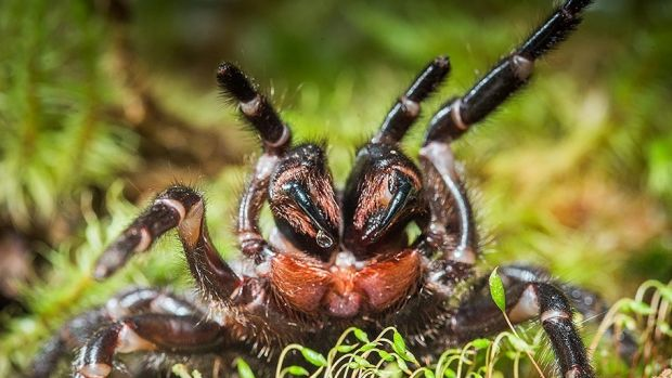 Traditionally, spiders lived outside. But the luxuries of modern homes have meant they have become accustomed to a ...