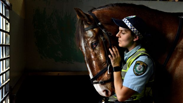 Toby the police horse with Nadia Batten, his main rider.