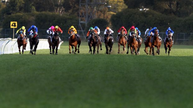Strong win: Jockey James McDonald rides Winx (far right) to win The Theo Marks Stakes on Saturday.