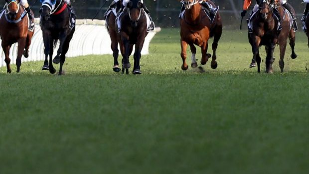 Whip hands: Under the current rule, jockeys are restricted to using no more than five forehand strikes on any horse ...