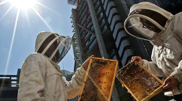 By studying the behaviour of bees, town planners may learn a thing of two.