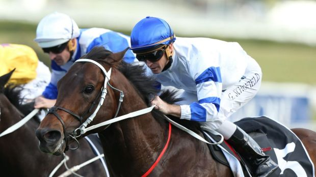 Feeling the effects: Kermedec ridden earlier by Glyn Schofield (blue cap) to win the George Main Stakes.