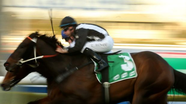 Ready for the Shannon Stakes: God's In Him has trainer Michael Hawkes ready to roll.