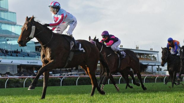 Top chance: Akavoroun runs in the Shannon Stakes at Rosehill on Saturday.