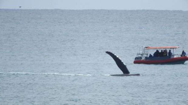 Whales seen off Byron Bay