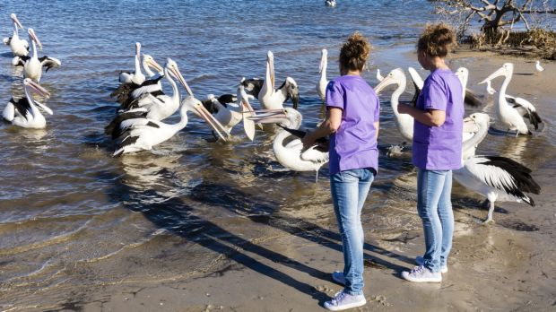 """""""We've got a real, real big heart for the seabirds."""""""