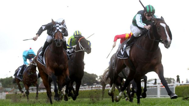 Striding away: Tye Angland rides Hooked to win the Tramway Stakes at Randwick earlier this month.