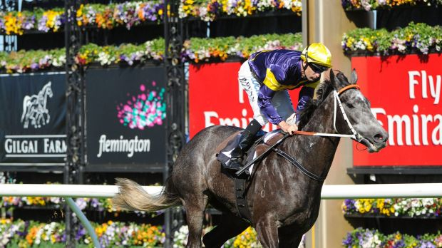 Great grey: Chautauqua will come up against a strong field in the Newmarket Handicap.