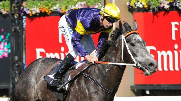 Great grey: Chautauqua will face a quality field in the Lightning Stakes.