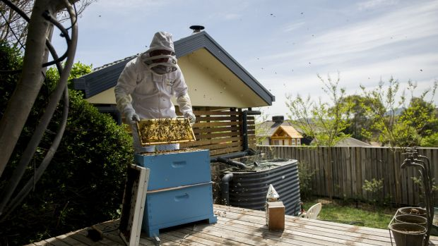 Beekeeper Kevin Wode re-homing a swarm with newcomers to beekeeping in the ACT.
