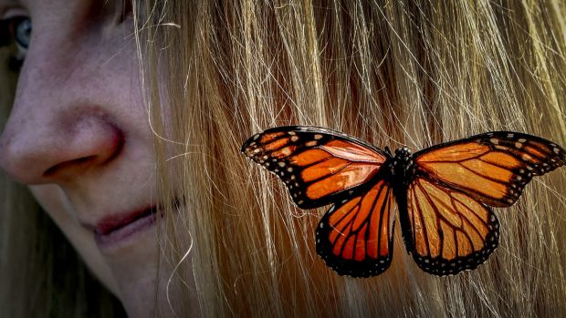 Butterfly breeder Skye Blackburn says butterflies are a good way to get people interested in other insects.