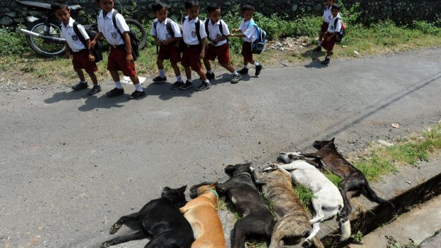 Children walk past dogs killed in a cull.