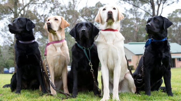 <i>Dogs: Their Secret Life</i>, SBS, Monday, 7.30pm.