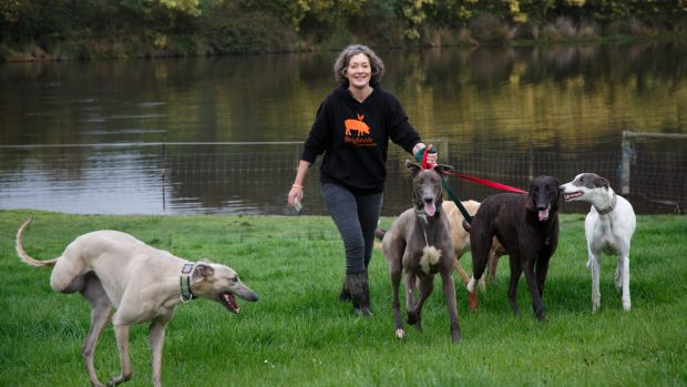 Emma Haswell, the owner of Brightside Farm Sanctuary in the Huon Valley, near Hobart, with a posse of greyhounds  she ...