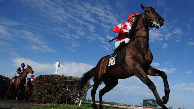 A cool but fine day expected at the Caulfield Cup on Saturday.