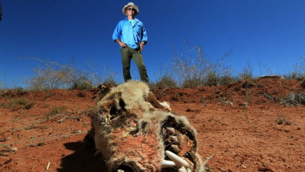 Brendan Cullen stands near the skeleton of a wild dog, which had likely been killed by bait.