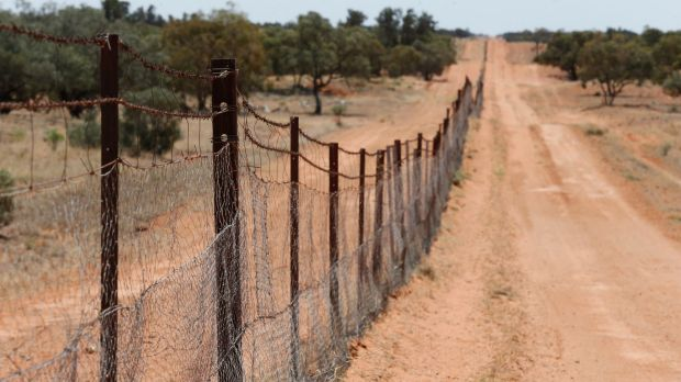 The dingo fence is the longest fence in the world. Built in 1880, it runs from Queensland, then along the NSW South ...
