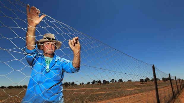 Brendan Cullen lives on the frontline, the eastern side of the dog fence that was built to stop wild dogs coming east ...