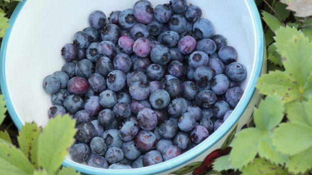 Blueberries have been marketed as one of nature's most potent antioxidants.