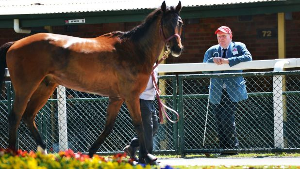 Eyes and ears: Trip to Paris' owner Andy Gemmell at Caulfield race track.
