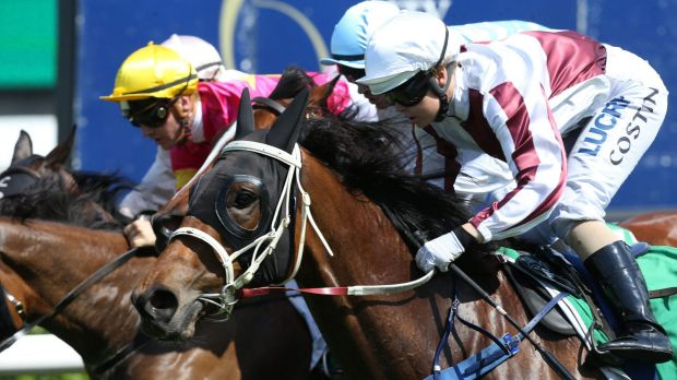 Grand Proposal won the inaugural Highway Handicap and is now gunning for the NSW Country Championship.