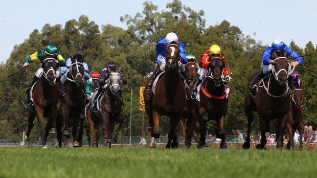 Cox Plate hopeful: William Buick could ride Contributer in the Cox Plate.