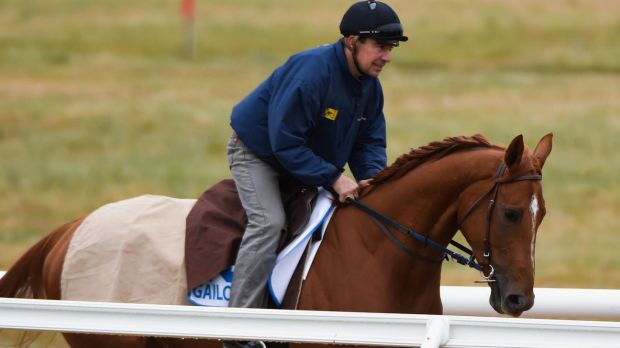 Cox Plate contender: French galloper Gailo Chop at Werribee.