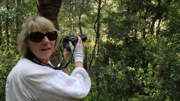 """Fighting for the owl: Local resident Patricia Brown said she was """"in tears"""" the first time she saw a rare powerful owl ..."""