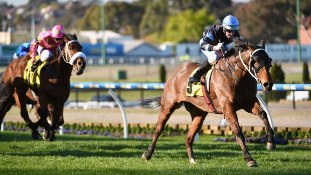 Great team: Noel Callow and The Cleaner take out the Dato Tan Chin Nam Stakes in September.