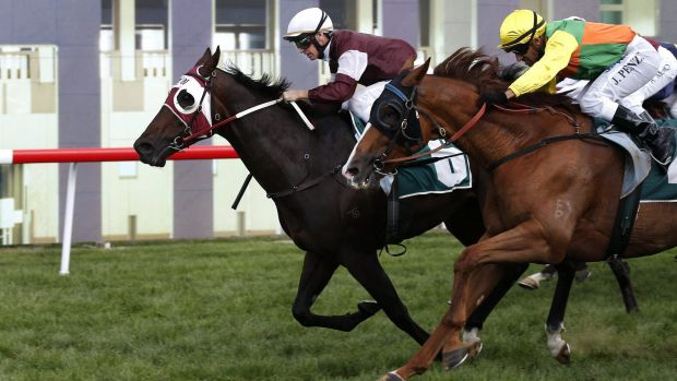 Winning pedigree: Ruling Queen's half-brother Court Connection won the Canberra Cup.