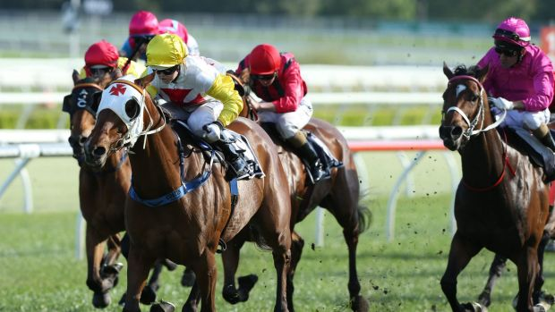 Cricket score odds: Winona Costin and Casino Dancer take out the Angst Stakes.