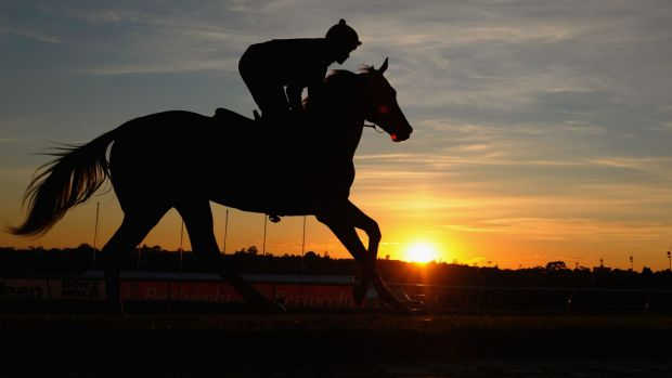 Hard yards: Michael Walker rides Criterion during a trackwork session at Mooney Valley Racecourse.