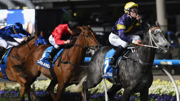 Stunning win: Tommy Berry and Chautauqua blitzed the field to claim the Manikato Stakes.